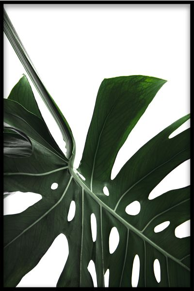 Monstera Close Up N02 Poster