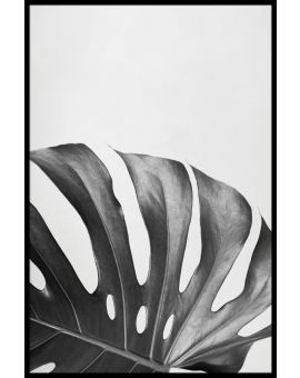 Monstera Deliciosa Leaf Poster